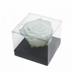 XL White Ecuadorian Eternity Flowers Preserved Roses 9cm to 10cm