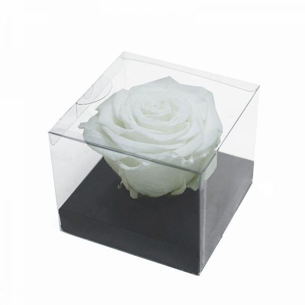 Large White Eternity Rose