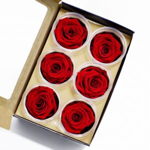 Red Ecuadorian Eternity Flowers Preserved Roses Pack of 6 6cm to 7cm