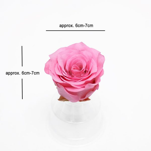 Pink Eternity Roses