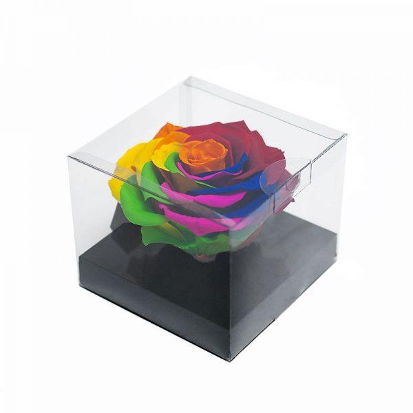 Jumbo Rainbow Color Ecuadorian Eternity Flower