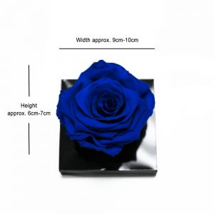 XL Blue Ecuadorian Eternity Flower Preserved Rose 9cm to 10cm