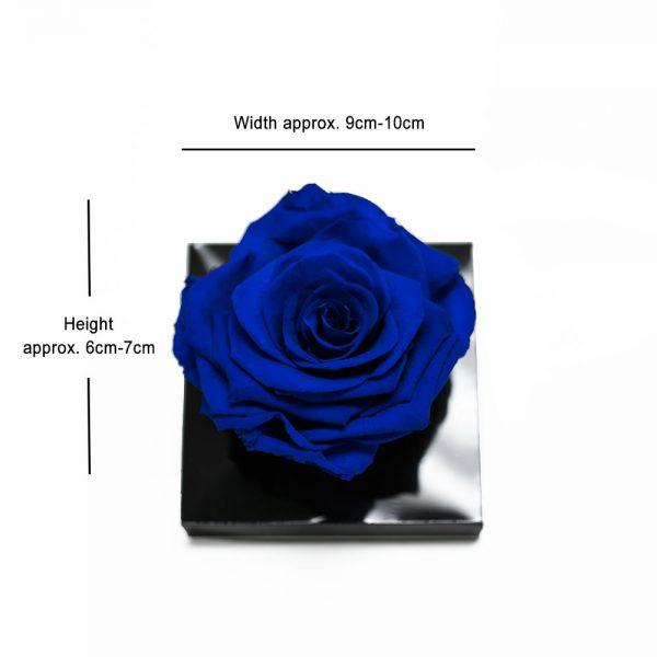 Jumbo Blue Eternity Rose