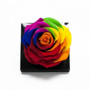 Jumbo Rainbow Color Ecuadorian Eternity Flower Preserved Rose 9cm to 10cm