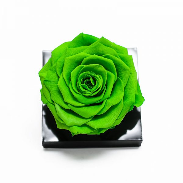 Jumbo Green Ecuadorian Eternity Rose