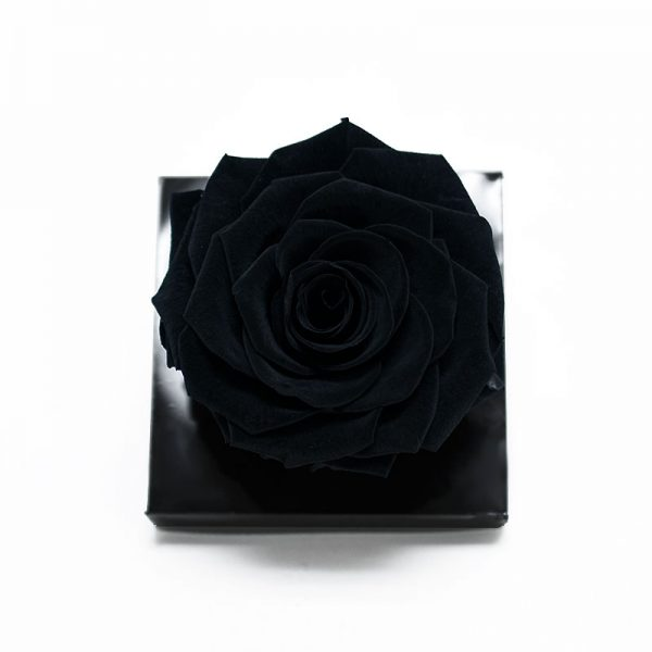 Jumbo Black Ecuadorian Eternity Flower