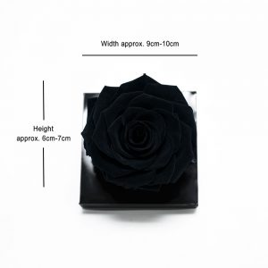 Jumbo Black Ecuadorian Eternity Flower Preserved Rose 9cm to 10cm
