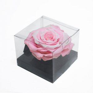 XL Pink White Ecuadorian Eternity Flowers Preserved Roses 9cm to 10cm